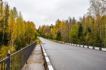 Autumn forest road landscape