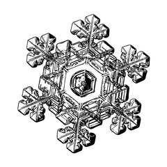 Snowflake isolated on white background. This illustration based on macro photo of real snow crystal: elegant stellar dendrite with relief surface, large central hexagon and short, broad arms.