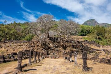 Laos - Frangipani Allee in Wat Phou