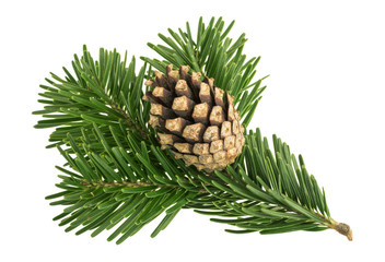 Fir tree isolated on white background Wall mural
