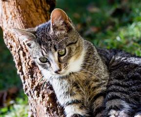 Pretty little cat outdoor