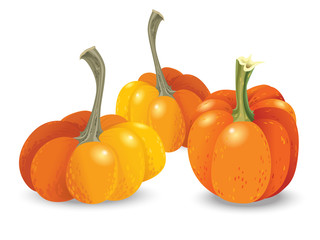 Halloween pumpkin set. Different shapes and sizes orange gourds isolated on white background. Vector illustration.