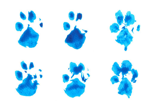 set of blue dog's footprint watercolor on white background