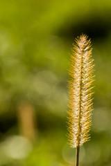 Field. Nature. Village. Green background