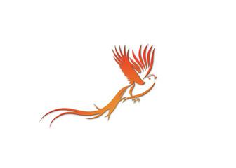 phoenix_transp