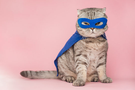 superhero, scotch whiskey with a blue cloak and mask. The concept of a superhero, super cat, leader. On a pink background. Macho and cute cat
