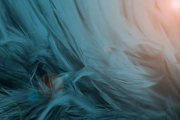 Closeup dark blue azure feather pattern texture background with orange ligh flaret