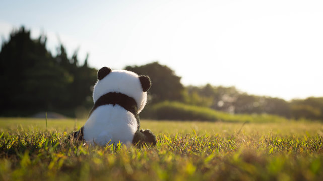 A lonely stuffed toy panda sitting on green grass in the field during sunset.