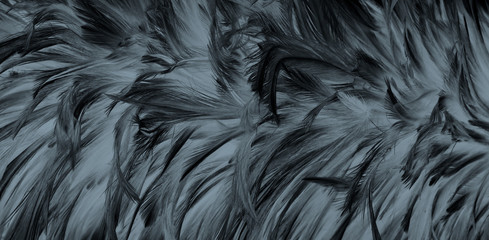 Beautiful black feather pattern  texture background