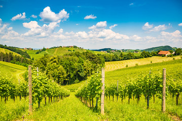 Sulztal, Styria / Austria Vineyards Sulztal Leibnitz area famous destination wine street area south Styria , wine country in summer. Tourist destination. Green hills and crops of grapes. Tourist spot.