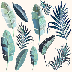 Set of vector palm leaves high detailed realistic style