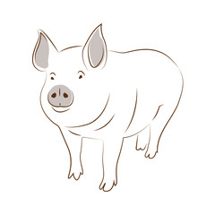 A funny picture of pig, a simple illustration.