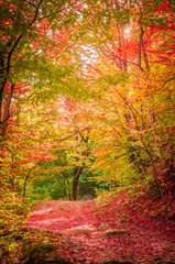 Autumn in Cozia, Carpathian Mountains, Romania. Vivid fall colors in forest. Scenery of nature with sunlight through branches of trees. Colorful Autumn Leaves. Green, yellow, orange, red.