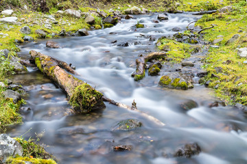streams closeup in the forest