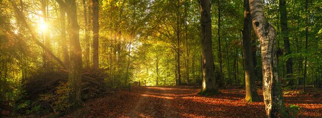 Herbstlicher Waldweg mit bunten Blättern Fotoväggar