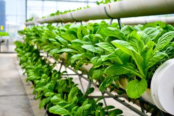 organic vertical farming Fotomurales