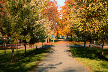 Autumn landscape. Background of autumn trees in the park with colorful red and yellow foliage.