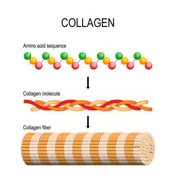 Collagen. Molecular structure.