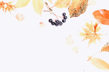 Frame made of autumn dry multi-colored leaves and berries of chokeberry on white background. Autumn, fall concept. Flat lay, top view, copy space