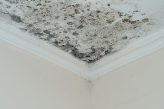 Fungus mold close up roof corner humid