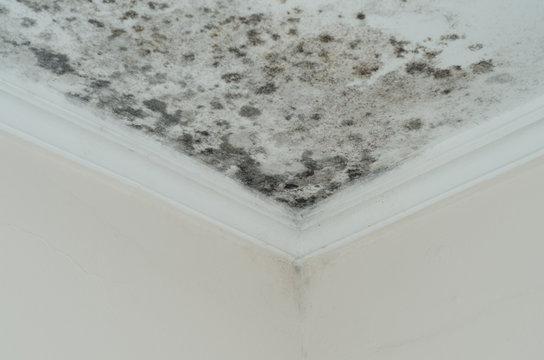 Fungus mold close up roof corner humid
