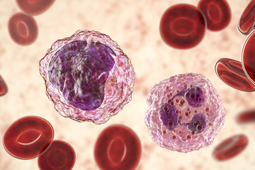 Monocyte (left) and neutrophil (right) surrounded by red blood cells, 3D illustration