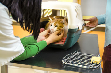 Cat in transportation cage on veterinarian table getting ready for treatment