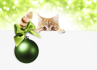 christmas ginger cat gift card with green ball and bright ribbon bow, copy space template