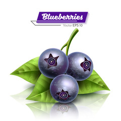 Blueberries with a petal. Realistic Vector Illustration