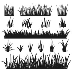 Set of black grass silhouettes isolated on white background. Grass heights design elements of nature. Template for design. Lawn vector illustration