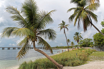 Big Pine Key, Florida, USA - July 21, 2016: Landscape with palm trees on the beach with white sand, turquoise water