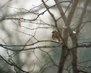 Pretty little bird sitting on a branch in the snow for a book cover or holiday card