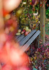 Natural autumn background with apple