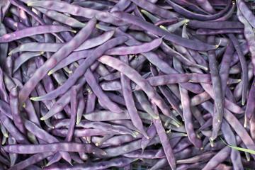 Fresh purple beans