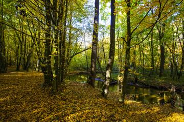Fall landscape. Colorful fall nature scene