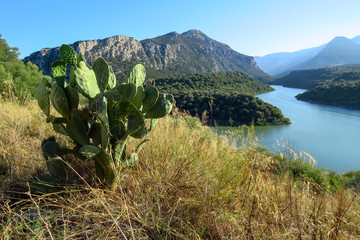 Beautiful landscape with a prickly pear cactus (Opuntia) in front of the Cedrino river and mountains in the background, Dorgali, Sardinia