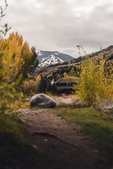 Autumn foliage at Nottingham Park in Avon, Colorado.