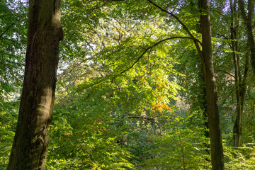 tree in forest - autumn transition