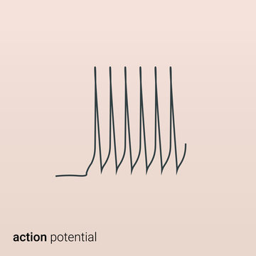 An action potential. Physiology of the working brain