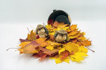 Ahornblätter vor einem kleinen Blecheimer. In dem Blätterhaufen sitzt ein Igelpärchen mit Strohüten.