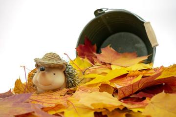 putziger Igel der in einem Blätterhaufen sitzt