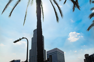 Wall Mural - Palm tree with Los Angeles skyscrapers on the background