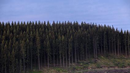 Ardennes/Belgium