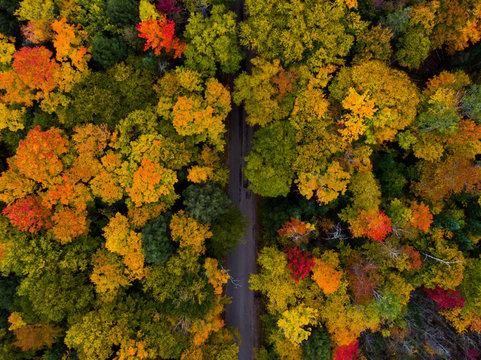 Muskoka Road Fall Colours