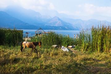 Horse walking on a meadow along Lago Atitlan with mountainrange and backlight, San Juan la Laguna, Guatemala, Central America