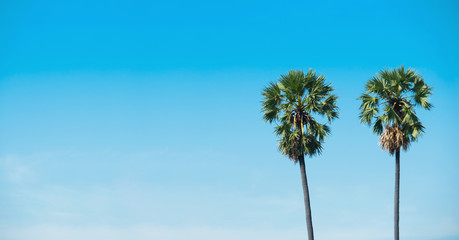 two palm tree on blue sky is background.