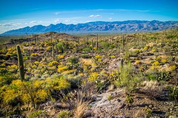 A silhouette view of Rincon Mountains in Saguaro National Park, Arizona
