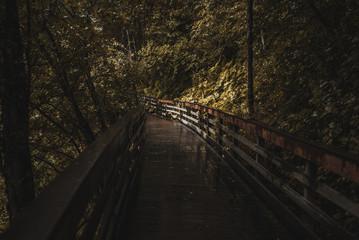 Bridge in the Alaskan Wilderness