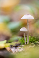 mushroom is the forest