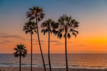 Palm trees on Manhattan Beach at sunset in California, Los Angeles, USA. Vintage processed.